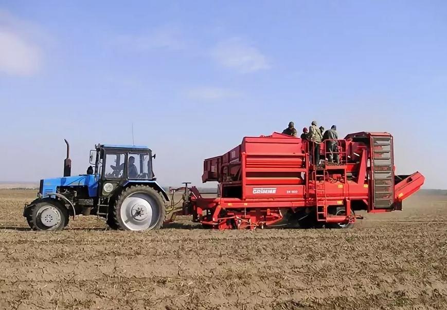 трактор мтз убирает картофель